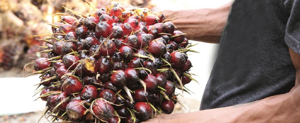 RSPO Сертификация цепочки поставок пальмового масла