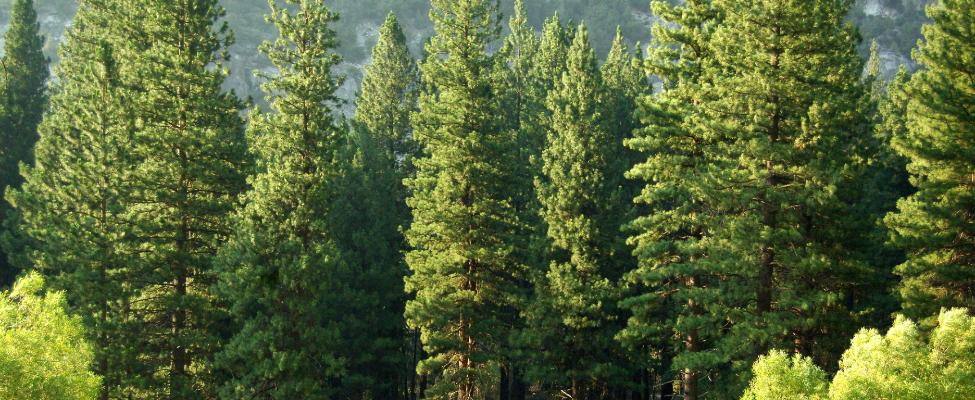 PEFC Сертификация цепочки поставок древесины