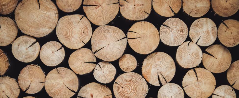 PEFC Сертификация системы управления лесным хозяйством
